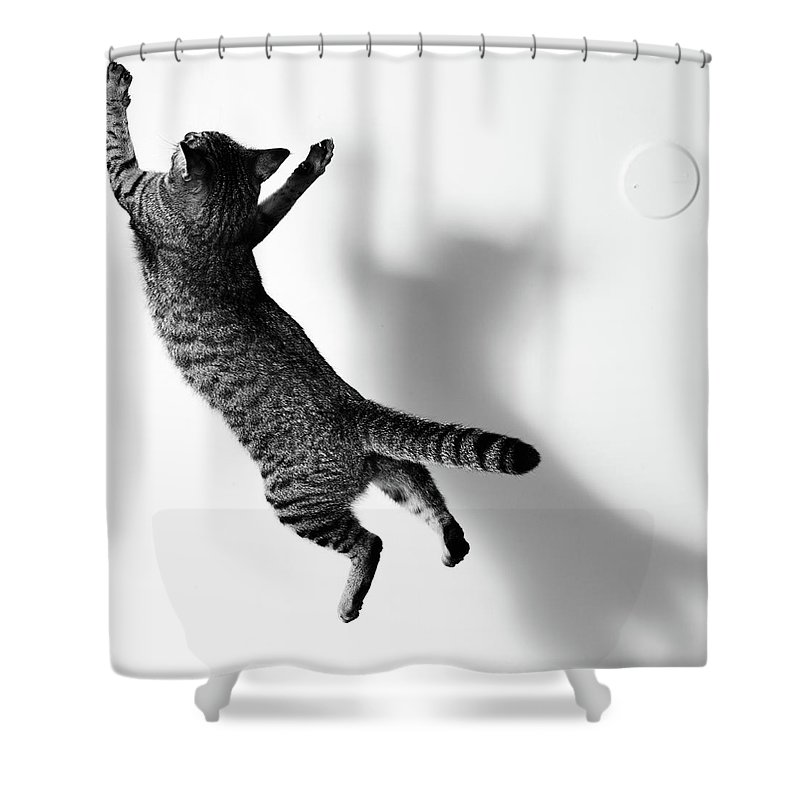 Pets Shower Curtain featuring the photograph Jumping Cat by Akimasa Harada