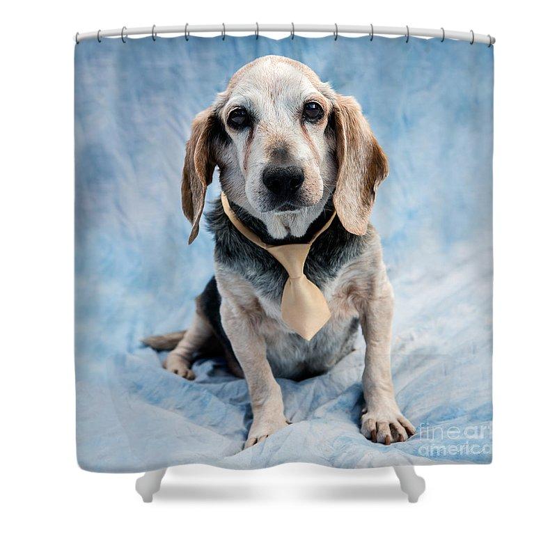 Beagle Shower Curtain Featuring The Photograph Kippy Senior By Iris Richardson