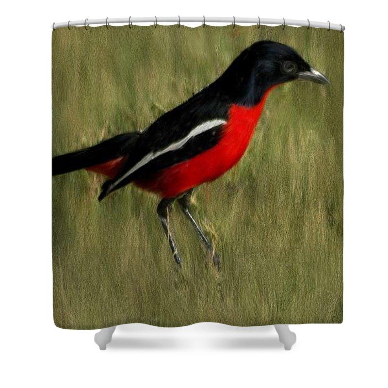 Bird Shower Curtain featuring the painting Laniarius Atrococcineus by Bruce Nutting