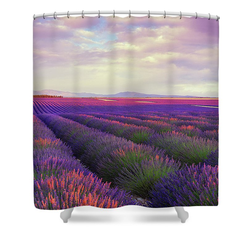 Dawn Shower Curtain featuring the photograph Lavender Field At Dusk by Mammuth