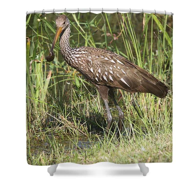 Limpkin Shower Curtain featuring the photograph Limpkin In The Glades by Christiane Schulze Art And Photography