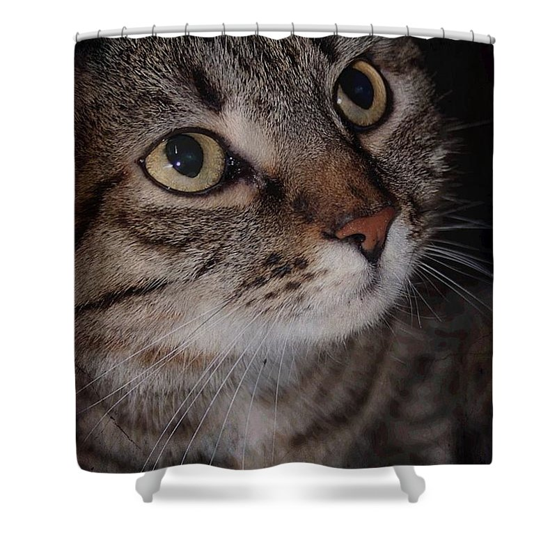 Brown Tabby Shower Curtain featuring the photograph Love Me by Joyce Baldassarre
