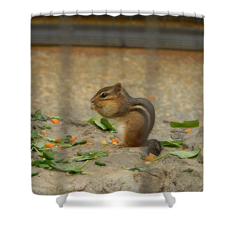 Animals Shower Curtain featuring the photograph Lunchtime by Brad Kennedy