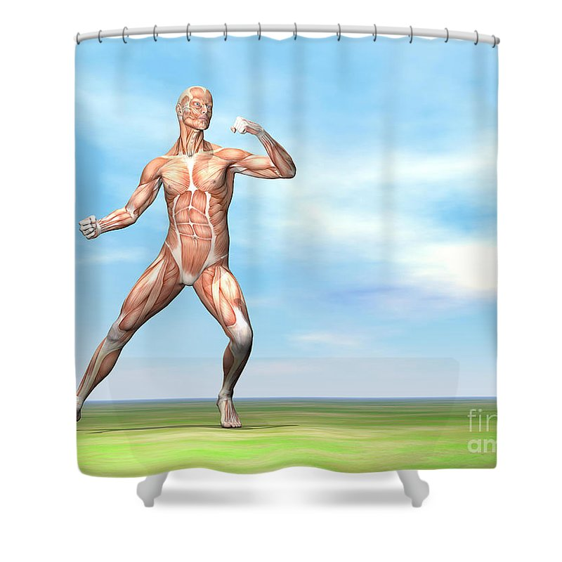 Musculature Shower Curtain featuring the digital art Male Musculature In Fighting Stance by Elena Duvernay