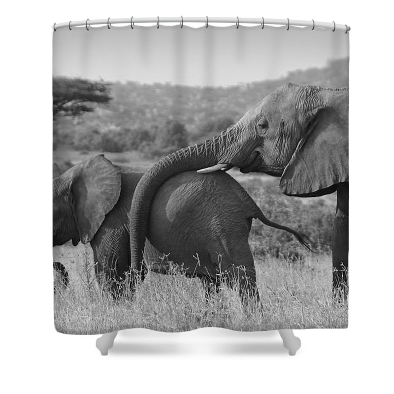 Africa Shower Curtain featuring the photograph Maternal Love by Michele Burgess