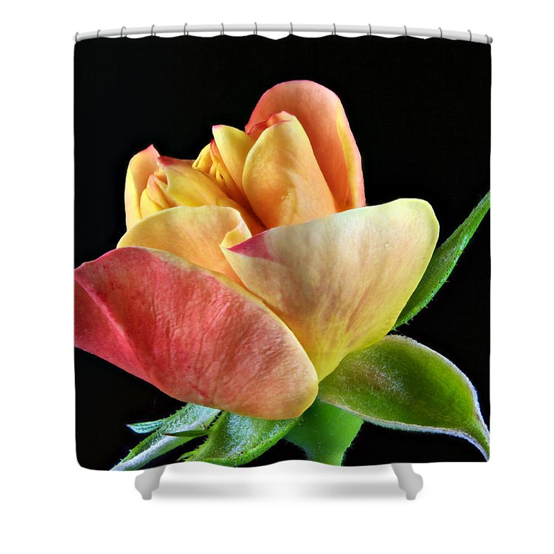 Rose Shower Curtain featuring the photograph Minature Rose by Ben Bassey