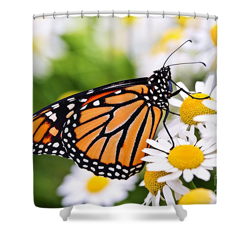Monarch Shower Curtain featuring the photograph Monarch Butterfly by Elena Elisseeva