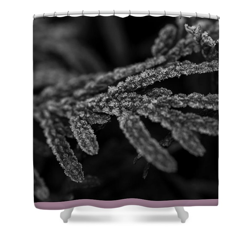 Miguel Shower Curtain featuring the photograph Morning Frost by Miguel Winterpacht