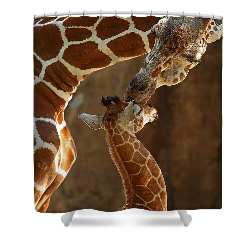 Giraffe Shower Curtain featuring the photograph Mother's Love by Traci Law