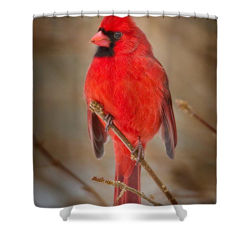 Cardinal Shower Curtains