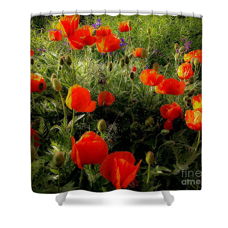 Poppy Shower Curtain featuring the photograph Orange Poppies In Sunlight by Kerstin Ivarsson