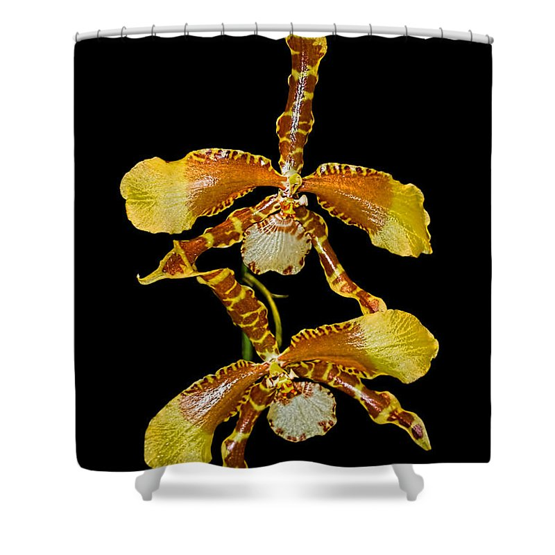 Orchid Shower Curtain featuring the photograph Orchid Series 104 by Barbara McMahon