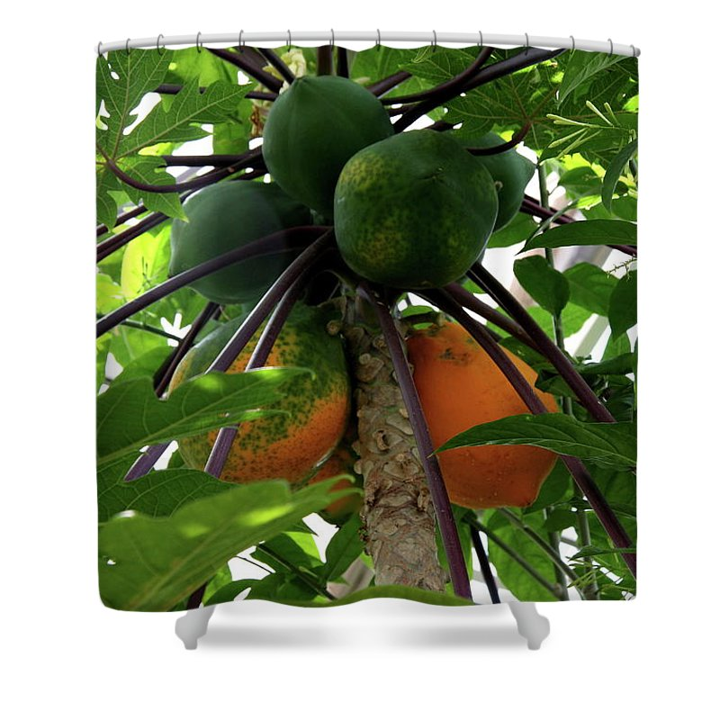 Papaya Shower Curtain featuring the photograph Papaya Tree by Christiane Schulze Art And Photography