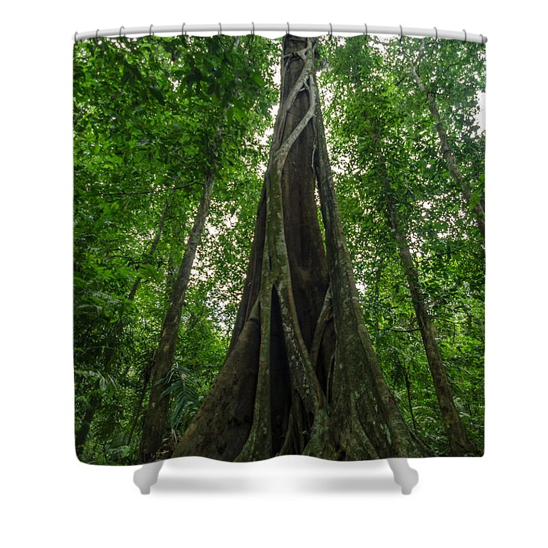 Tree Shower Curtain featuring the photograph Parasite Consuming A Tree by Jess Kraft