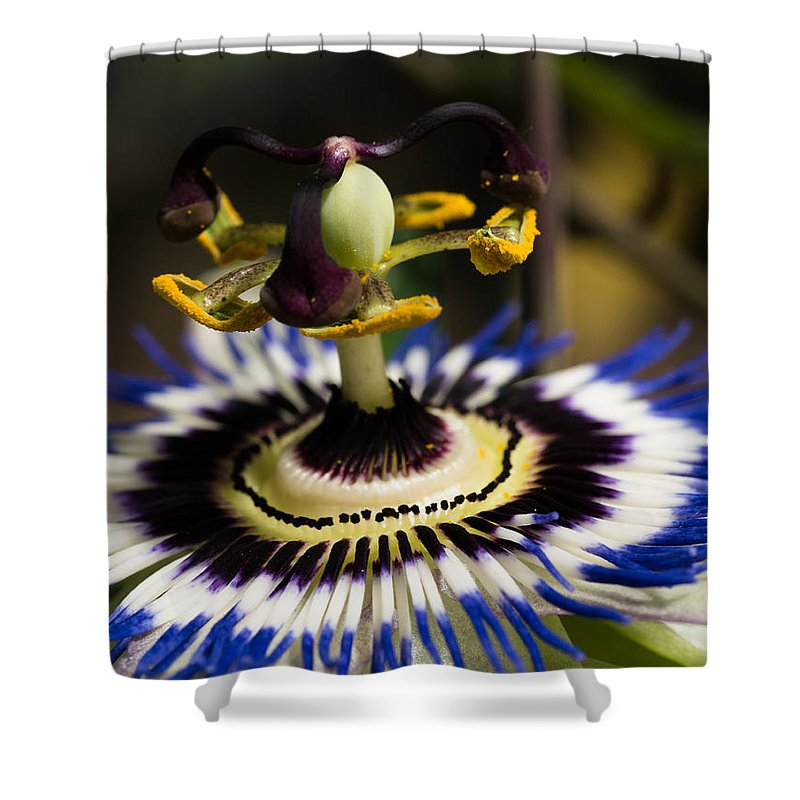 Blue Passion Flower Shower Curtain featuring the photograph Passion Flower by Brothers Beerens