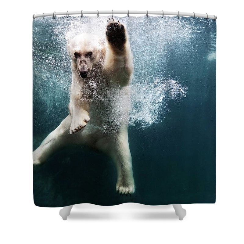 Diving Into Water Shower Curtain featuring the photograph Polarbear In Water by Henrik Sorensen
