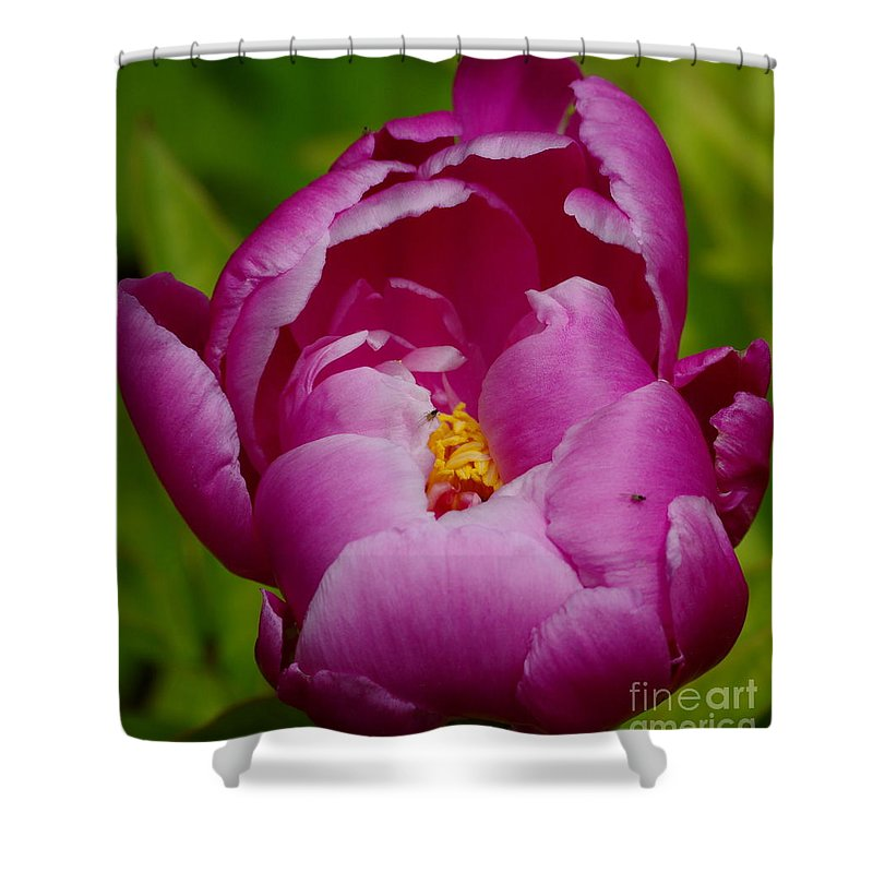 Pink Peony Shower Curtain featuring the photograph Pretty In Pink by Kitrina Arbuckle