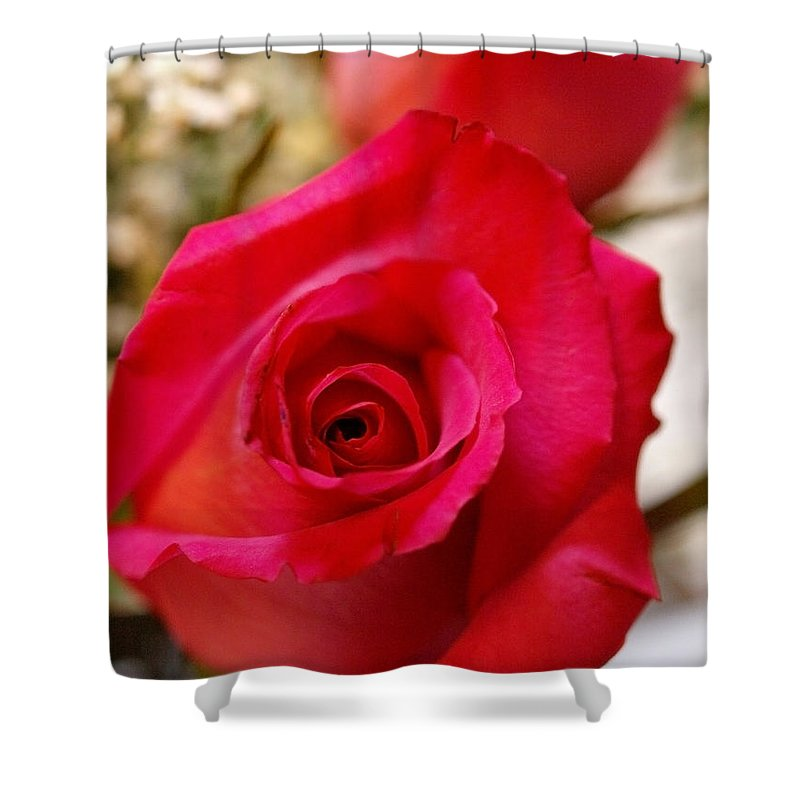 Rose Shower Curtain featuring the photograph Pretty In Pink by Teri Schuster