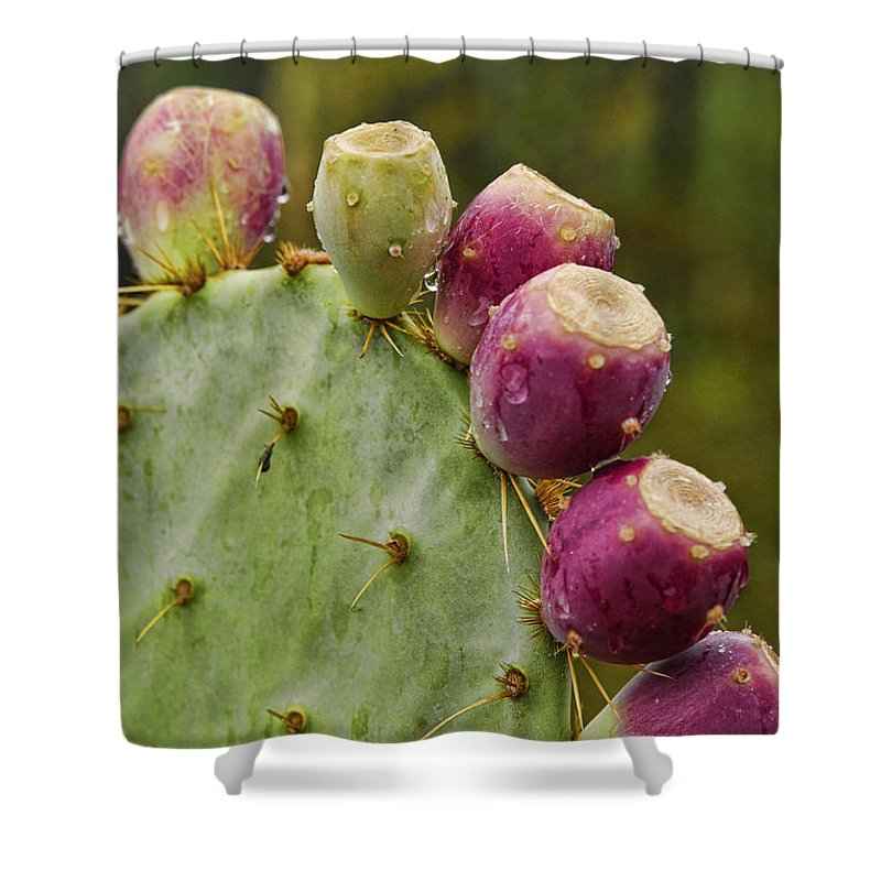 Prickly Pear Cactus Shower Curtain featuring the photograph Prickly Pear by Saija Lehtonen