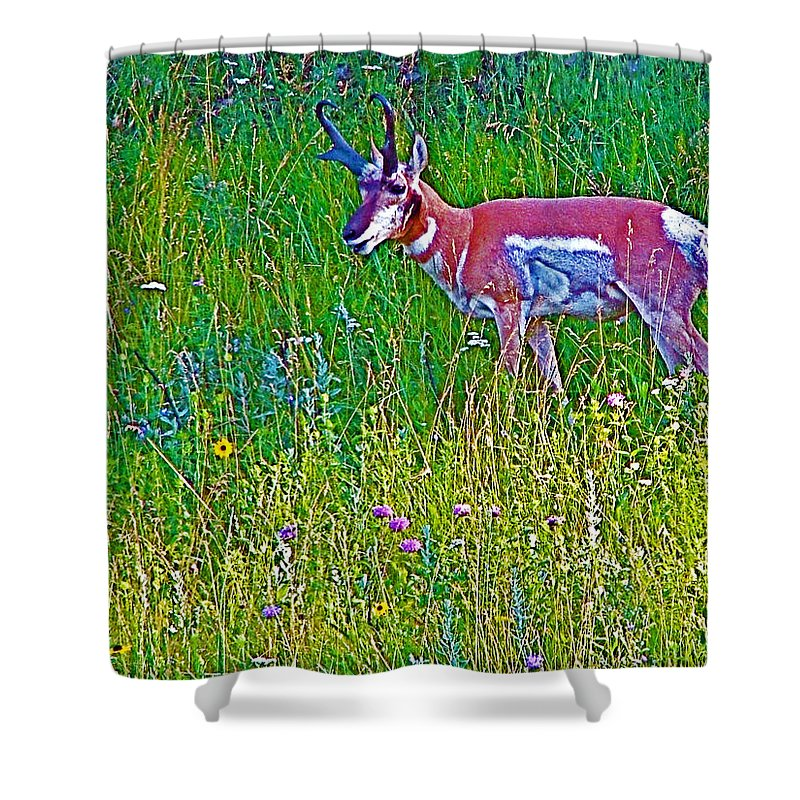 Pronghorn Among Wildflowers In Custer State Park Shower Curtain featuring the photograph Pronghorn Among Wildflowers In Custer State Park-south Dakota by Ruth Hager