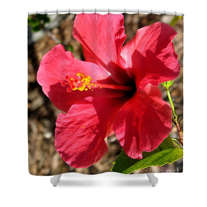 Hibiscus Shower Curtain featuring the photograph Red For Love by Christiane Schulze Art And Photography