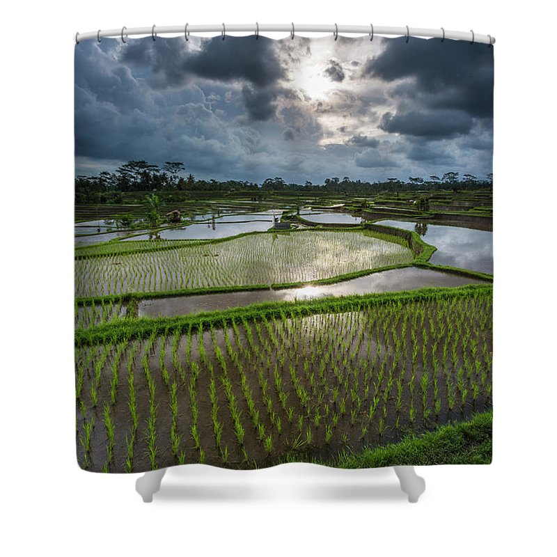 Tranquility Shower Curtain featuring the photograph Rice Terraces In Central Bali Indonesia by Gavriel Jecan