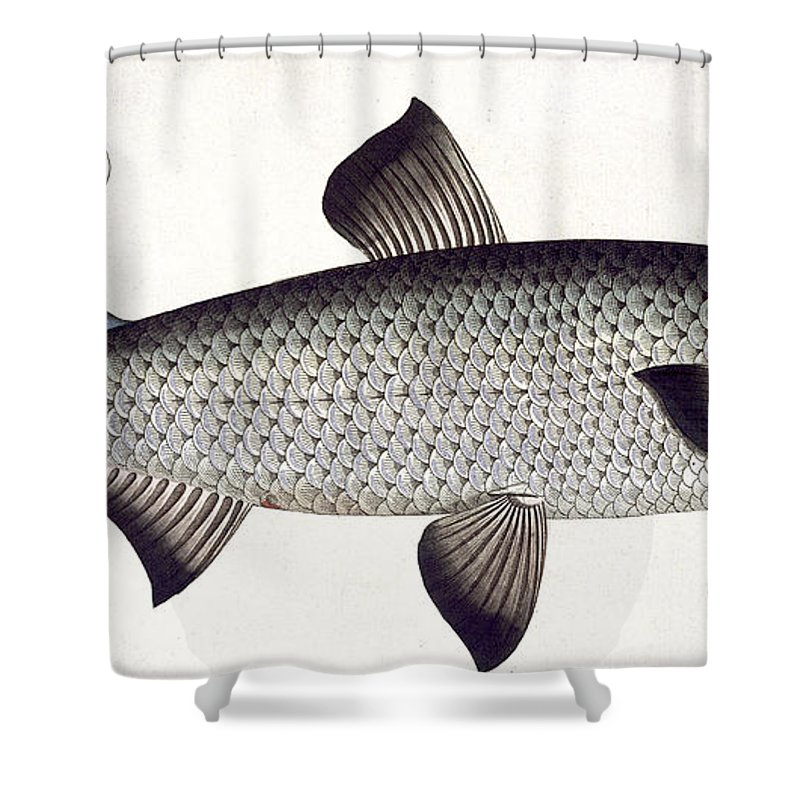 Fish Shower Curtain featuring the painting Salmon by Andreas Ludwig Kruger