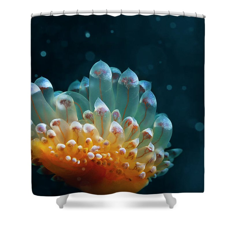 Underwater Shower Curtain featuring the photograph Sea Life by Ultramarinfoto