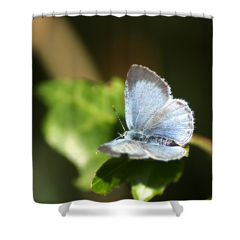 Butterfly Shower Curtain featuring the photograph Small Blue Butterfly by Chris Day