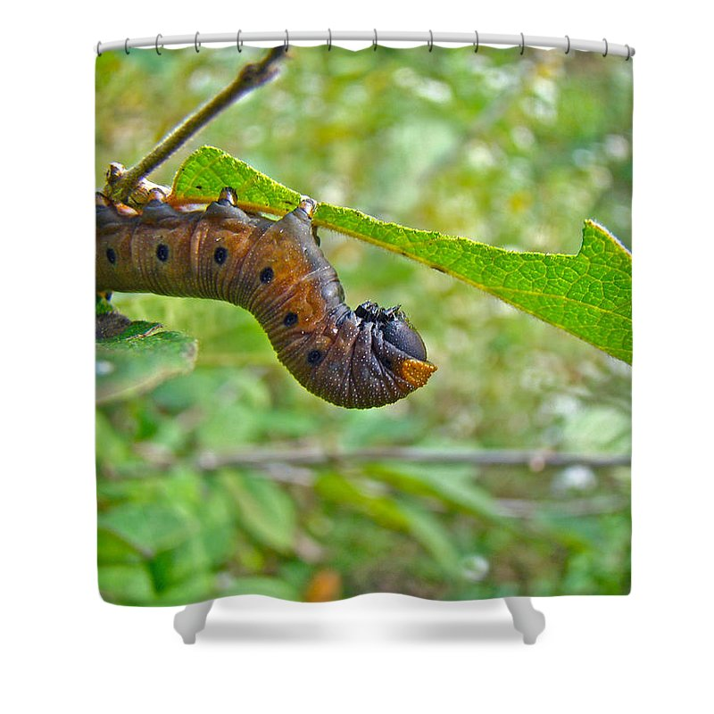 Caterpillar Shower Curtain featuring the photograph Snowberry Clearwing Hawk Moth Caterpillar - Hemaris Diffinis by Mother Nature