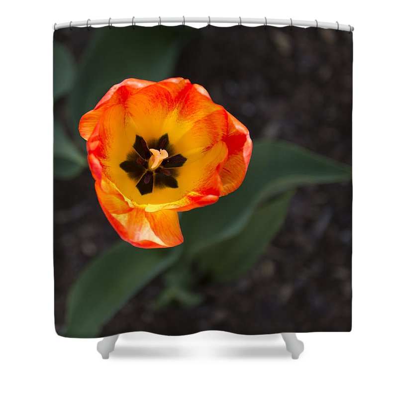 Spring Flowers Shower Curtain featuring the photograph Spring Flowers No. 10 by Greg Hager