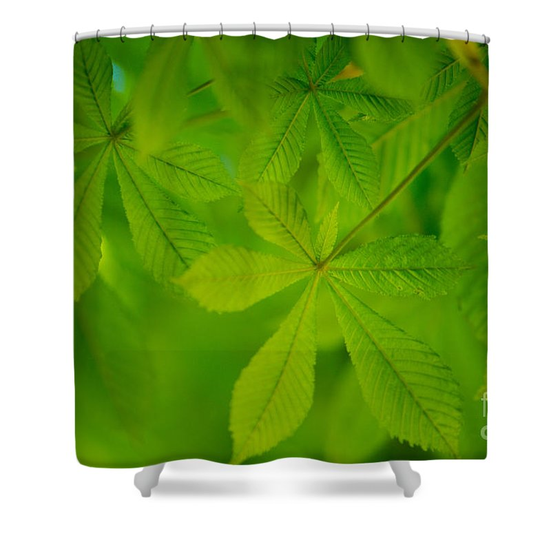 Conker Shower Curtain featuring the photograph Spring Green by Nailia Schwarz