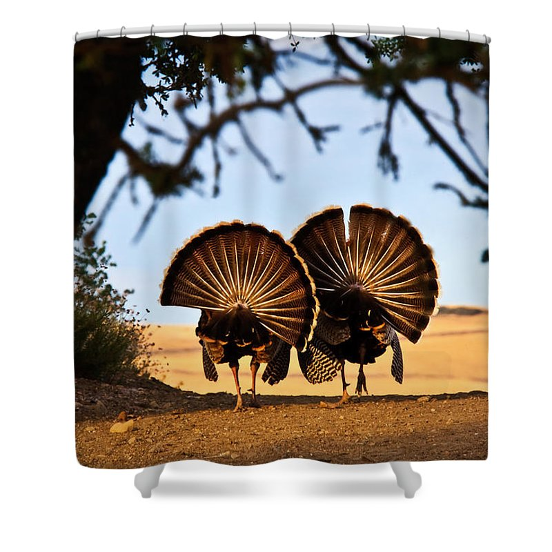 Turkey Shower Curtain featuring the photograph Strutten Their Stuff by Beth Sargent