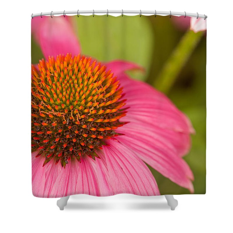 Coneflowers Shower Curtain featuring the photograph Summer Cone by Lindley Johnson
