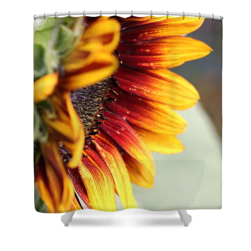 Mccombie Shower Curtain featuring the photograph Sunflower Named The Joker by J McCombie