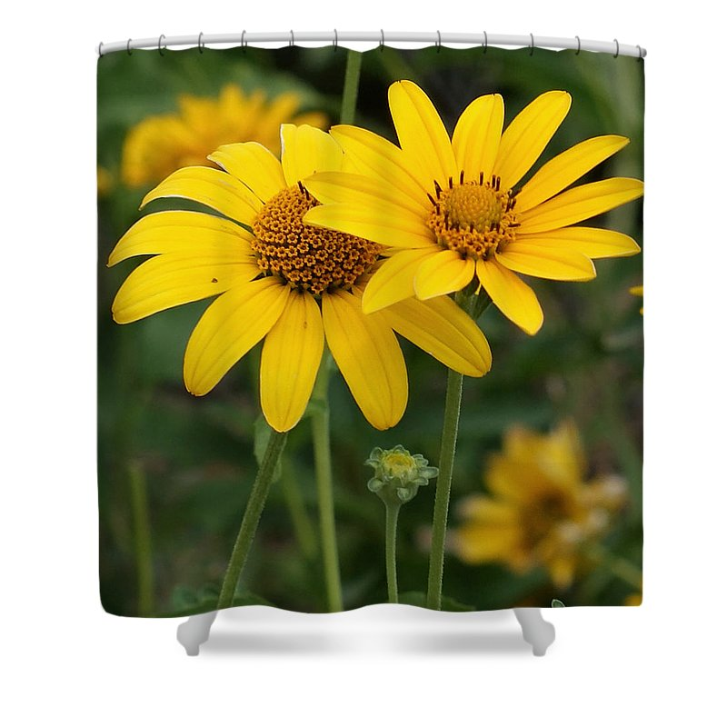 Sunflower Shower Curtain featuring the photograph Sunflowers by Ernie Echols