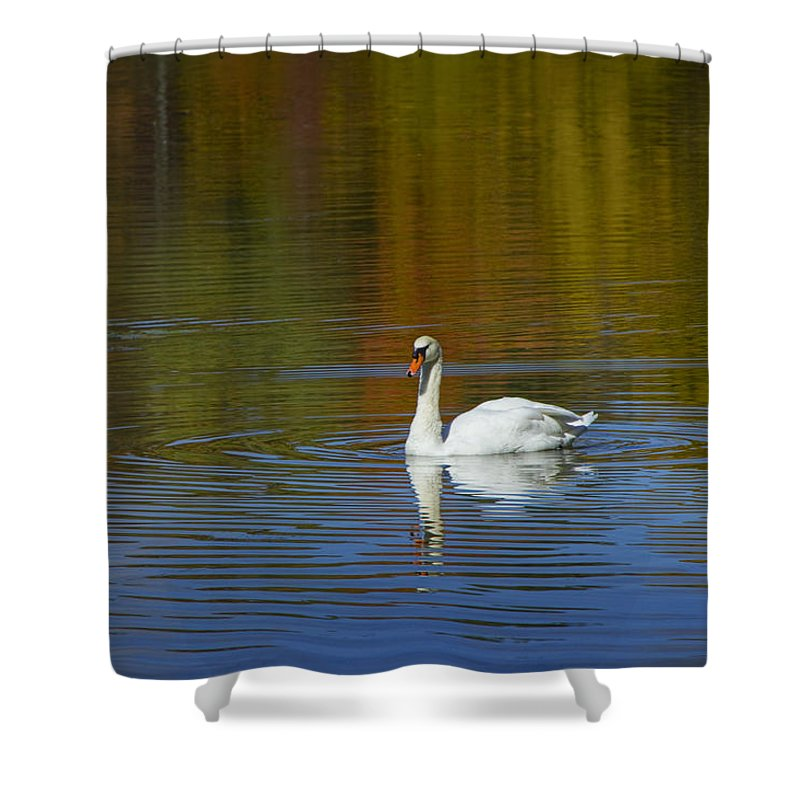 Art Shower Curtain featuring the photograph Swan On Wintergreen Lake by Randall Nyhof