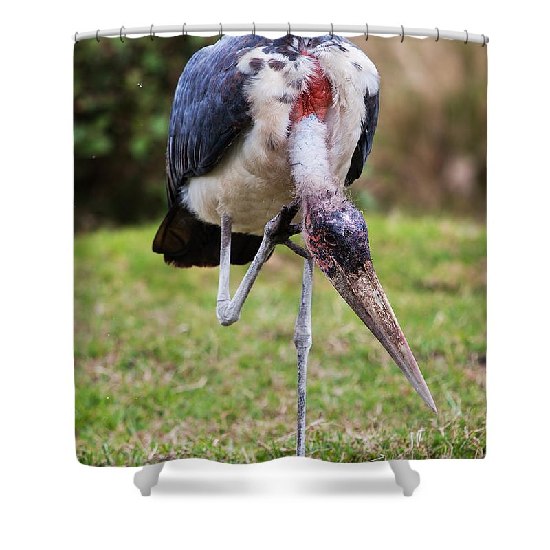 Marabou Shower Curtain featuring the photograph The Marabou Stork In Tanzania. Africa by Michal Bednarek