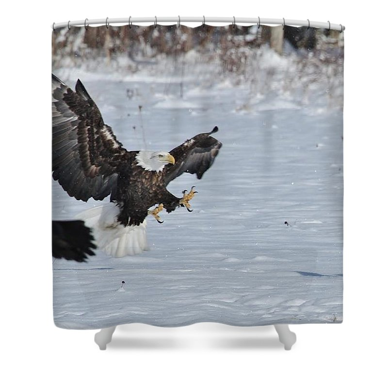 Bald Eagle Shower Curtain featuring the photograph Tough Love by Teresa McGill
