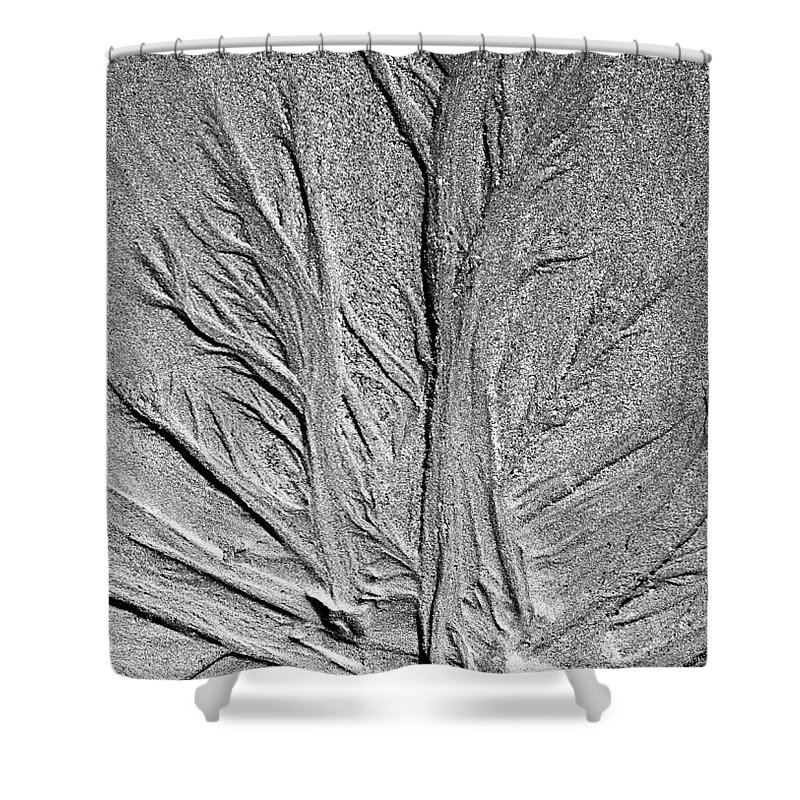 Beach Shower Curtain featuring the photograph Tree Of Life by Glenn Gordon