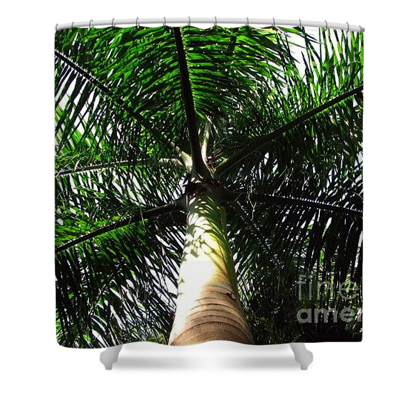 Palm Tree Shower Curtain featuring the photograph Under The Palm by Anita Lewis