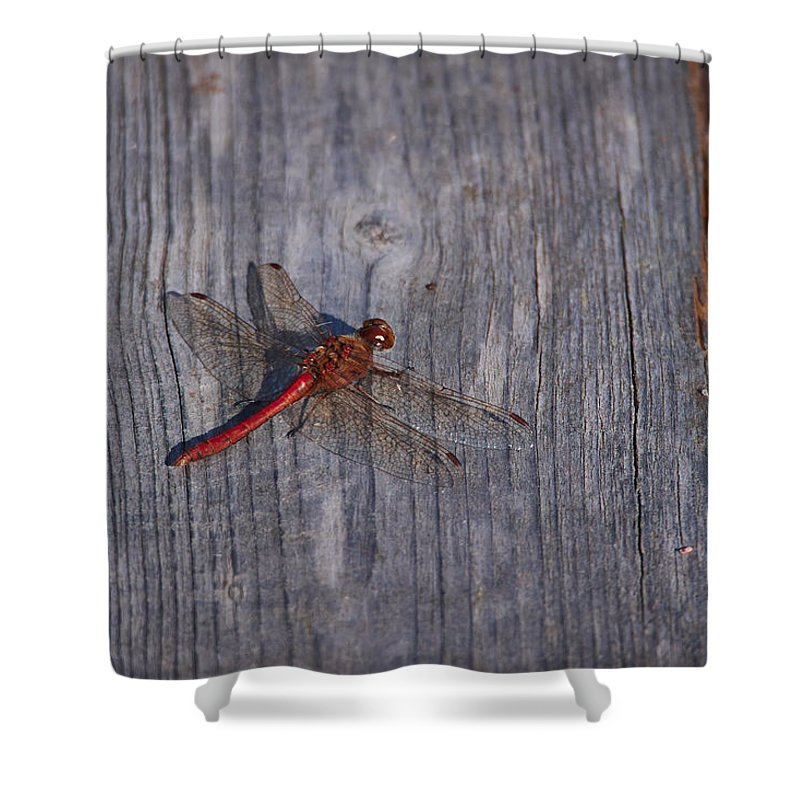 Finland Shower Curtain featuring the photograph Vagrant Darter by Jouko Lehto