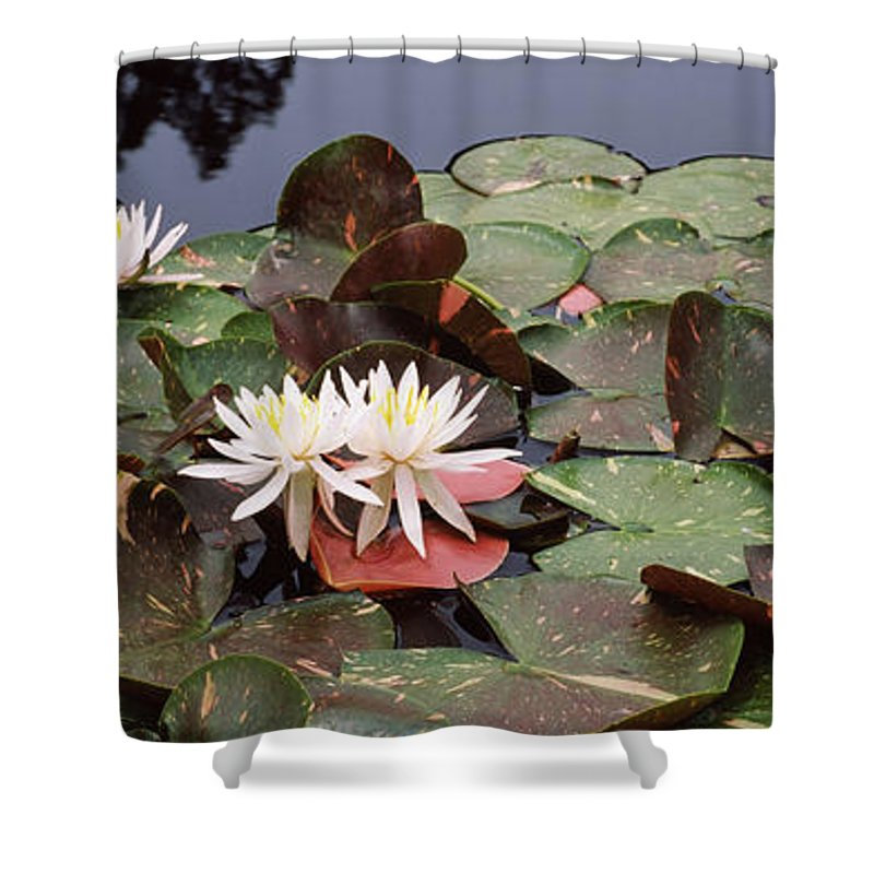 Photography Shower Curtain featuring the photograph Water Lilies In A Pond, Sunken Garden by Panoramic Images