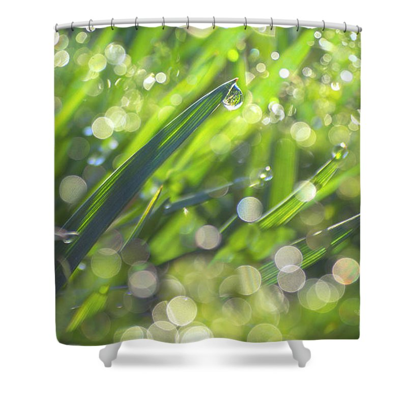 Grass Shower Curtain featuring the photograph Where The Fairies Are by Rima Biswas