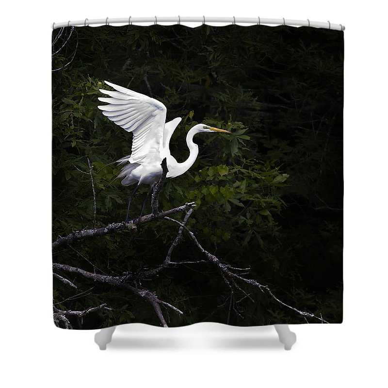 Bird Shower Curtain featuring the photograph White Egret's Takeoff by J L Woody Wooden