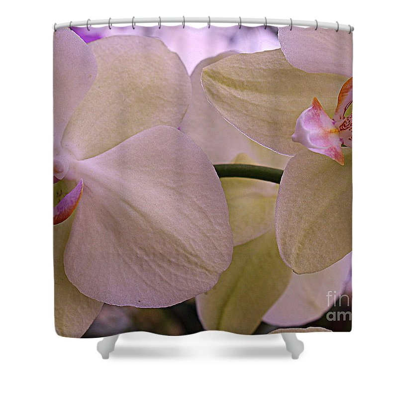 Orchid Shower Curtain featuring the photograph White Orchids by Dora Sofia Caputo Photographic Design and Fine Art