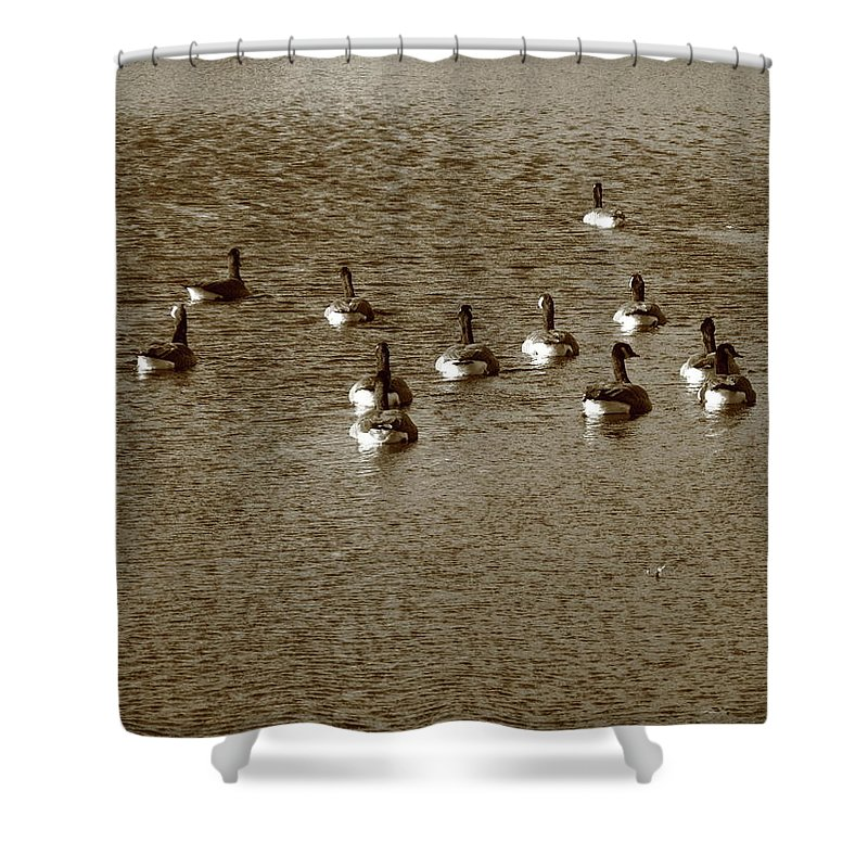 Animals Shower Curtain featuring the photograph Wild Birds And Pond by Frank Romeo