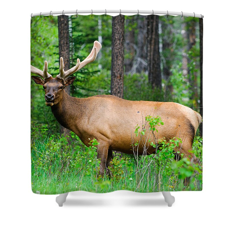 Adult Shower Curtain featuring the photograph Wild Bull Elk by Brandon Smith