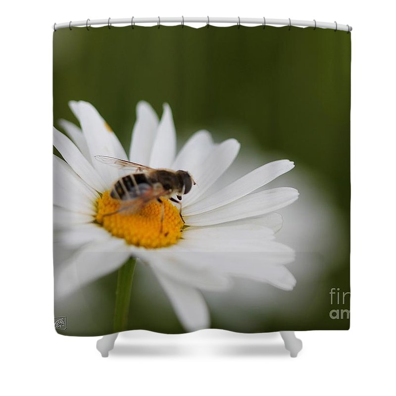 Mccombie Shower Curtain featuring the photograph Wildflower Named Oxeye Daisy by J McCombie