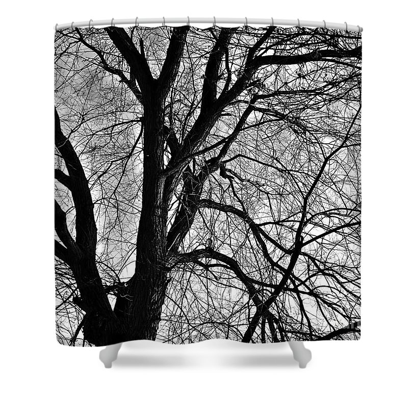 Winter Shower Curtain featuring the photograph Winter by Chalet Roome-Rigdon